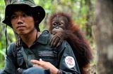 Orang-Utans: Zurück in die Freiheit - Bild 8