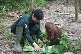 Orang-Utans: Zurück in die Freiheit - Bild 9