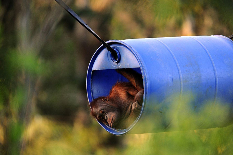 Orang-Utans: Zurück in die Freiheit - Bild 10