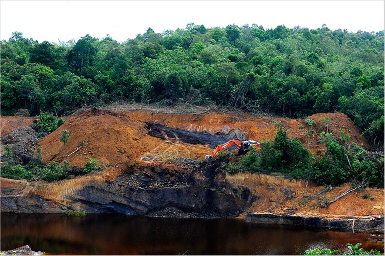 Orang-Utans: Zurück in die Freiheit - Bild 11