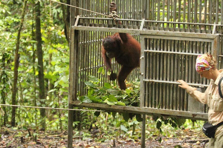 Orang-Utans: Zurück in die Freiheit - Bild 12
