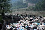 Mit 2000 Schafen über die Alpen - Bild 13