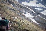 Mit 2000 Schafen über die Alpen - Bild 16