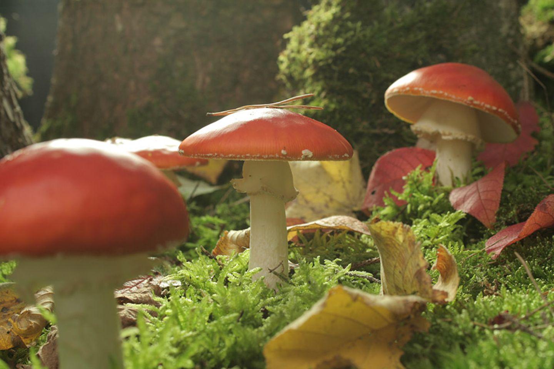 """Kinotipp: """"Das grüne Wunder - Unser Wald"""": Interview und Fotogalerie"""
