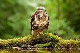 """Kinotipp: """"Das grüne Wunder - Unser Wald"""": Interview und Fotogalerie - Bild 4"""