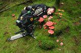 """Kinotipp: """"Das grüne Wunder - Unser Wald"""": Interview und Fotogalerie - Bild 10"""