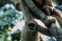 Fotogalerie: Die seltensten Arten der Erde - Bild 2