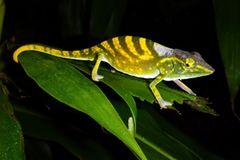Fotogalerie: Die seltensten Arten der Erde - Bild 3