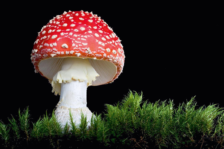 Fotogalerie: Die wundersame Welt der Pilze
