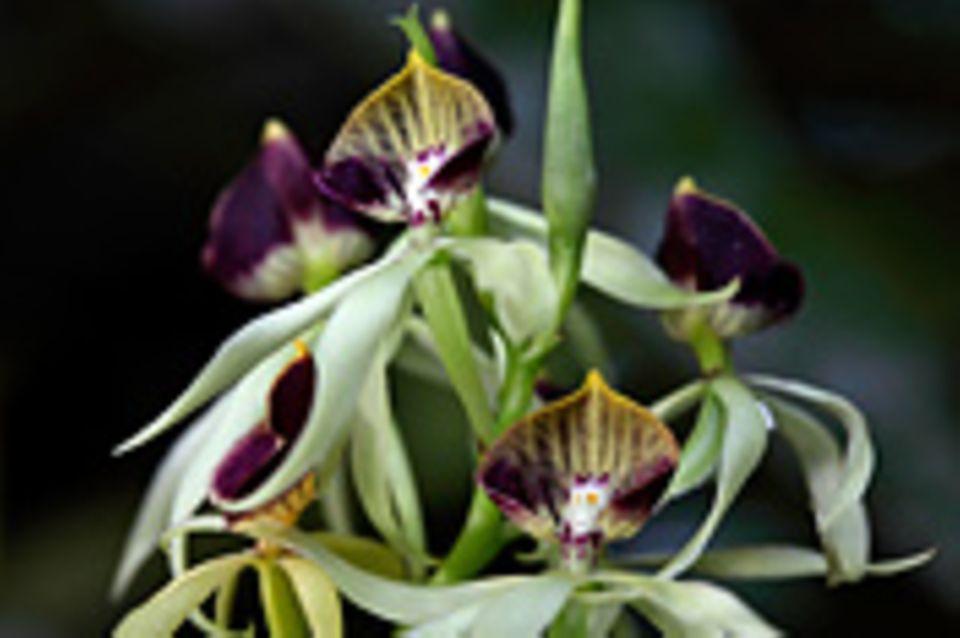 Fotogalerie: Orchideen