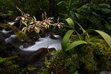 Fotogalerie: Orchideen - Bild 2