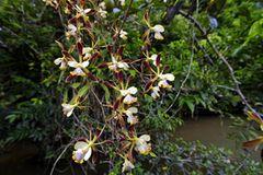 Fotogalerie: Orchideen - Bild 3