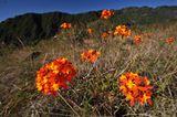 Fotogalerie: Orchideen - Bild 4