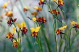 Fotogalerie: Orchideen - Bild 6