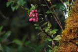 Fotogalerie: Orchideen - Bild 7