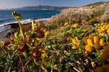 Fotogalerie: Orchideen - Bild 8