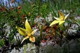 Fotogalerie: Orchideen - Bild 9