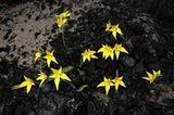 Fotogalerie: Orchideen - Bild 10