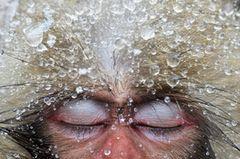 Fotogalerie: Die besten Naturfotografien 2012