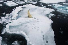 Fotogalerie: Die besten Naturfotografien 2012 - Bild 3