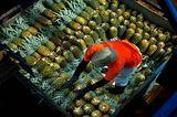 Fotogalerie: Naturwunder Costa Rica - Bild 2