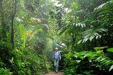 Fotogalerie: Naturwunder Costa Rica - Bild 7