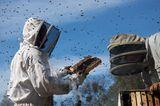 "Fotogalerie: ""More Than Honey"" - Bild 3"
