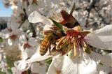 "Fotogalerie: ""More Than Honey"" - Bild 7"