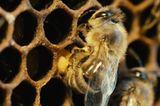 "Fotogalerie: ""More Than Honey"" - Bild 9"