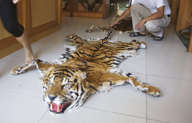 Tiger: Bedrohte Jäger - Bild 9