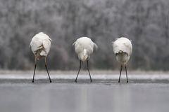 Fotogalerie: Die besten europäischen Naturfotografen - Bild 3
