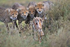 Fotogalerie: Die besten europäischen Naturfotografen - Bild 4