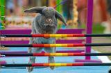 Kaninchenturnier: Auf die Pfoten, fertig, hopp! - Bild 5