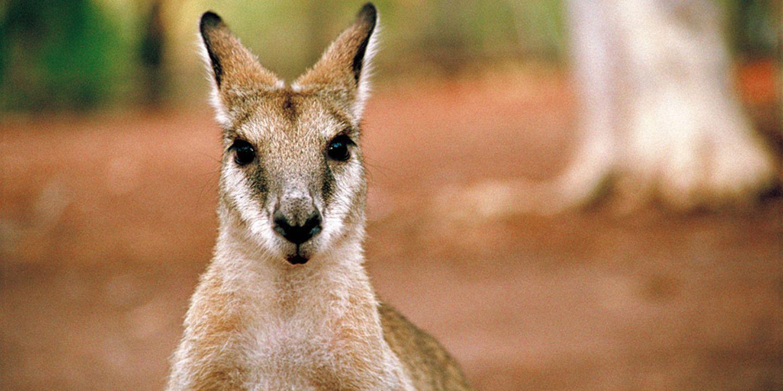 Fotogalerie: Mit dem Rad durch Australien - Bild 11
