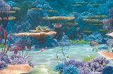 Kino: Kinotipp: Findet Nemo 3D - Bild 8