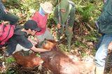Menschenaffen: Orang-Utans in Not - Bild 12