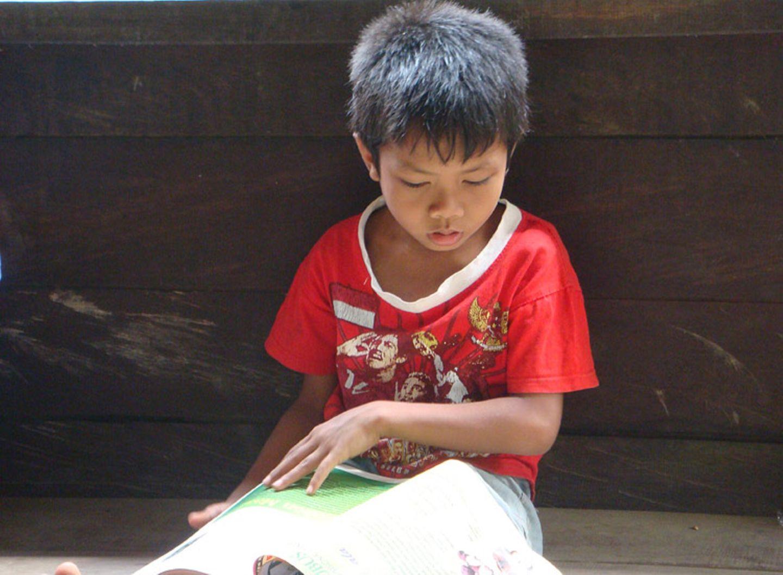 Menschenaffen: Orang-Utans in Not - Bild 15