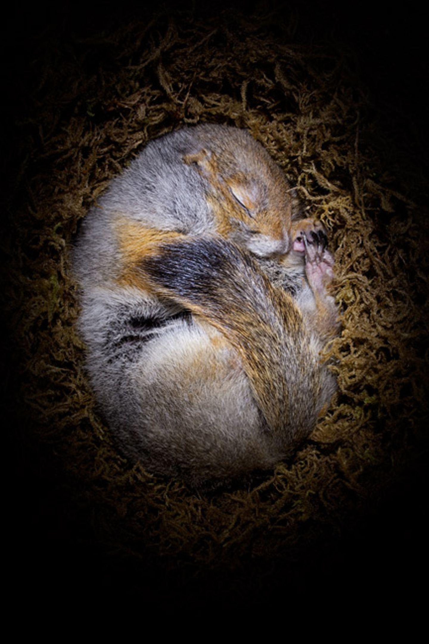 Fotogalerie: Tiere im Winterschlaf
