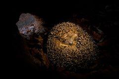 Fotogalerie: Tiere im Winterschlaf - Bild 3