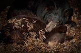 Fotogalerie: Tiere im Winterschlaf - Bild 5