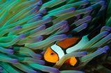 "Fotogalerie: ""Planet Ocean"" - Bild 3"