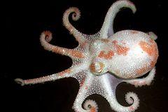 Fotogalerie: Kraken