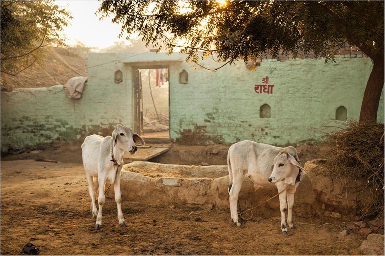 Fotogalerie: Momentaufnahme Indien - Bild 6