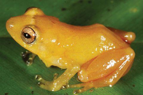 Biodiversität: Unbekannte Erdbewohner