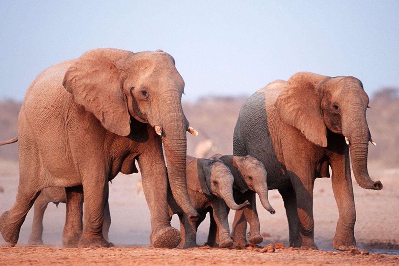 """Artenschutzkonferenz: """"Diese Konferenz ist historisch"""" - Bild 3"""