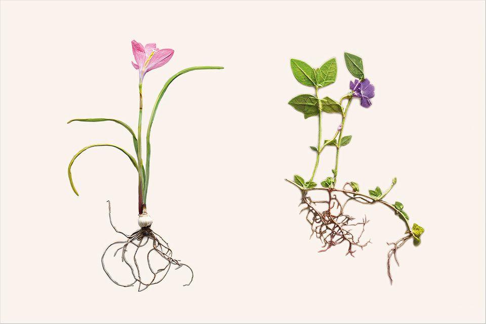 Fotogalerie: Blumen hinter Glas