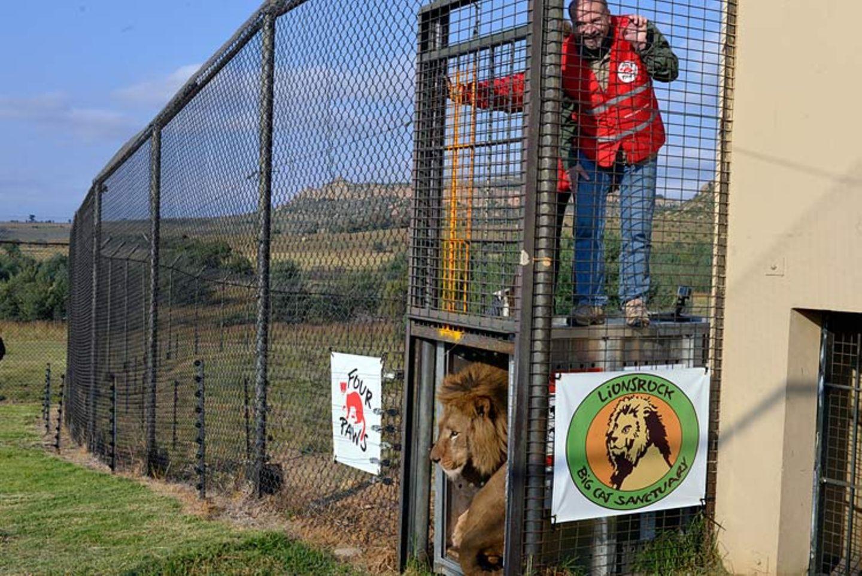 Neues Zuhause für Löwenfamilie - Bild 10