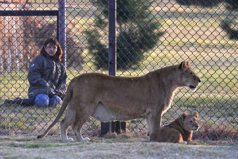 Neues Zuhause für Löwenfamilie - Bild 12