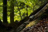 Urwaldrest in den Karawanken