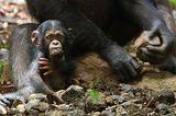 Kino: Kinotipp: Schimpansen - Bild 5